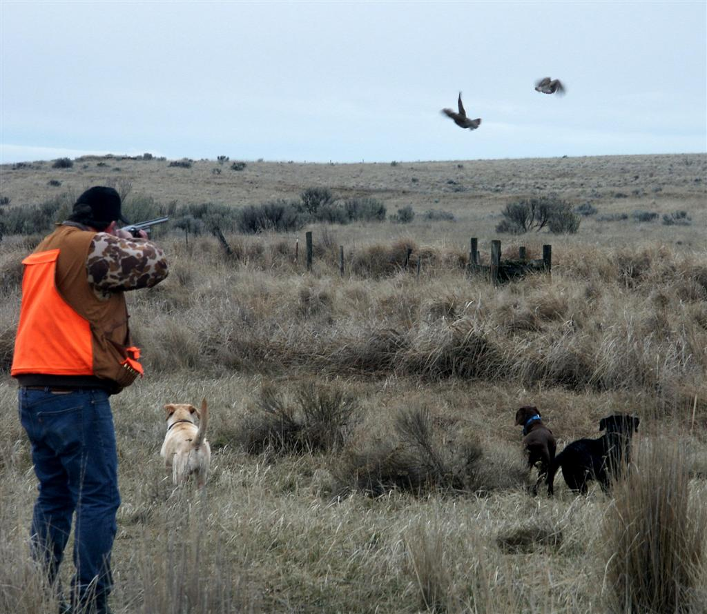 pheasant hunting pictures - HD 1024×890